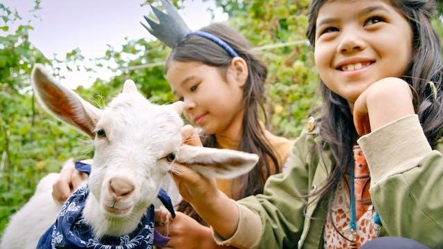 Episode 32 | Goats
