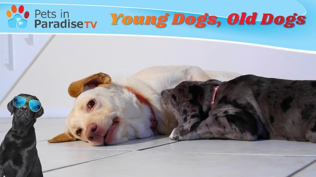 Young Dogs, Old Dogs