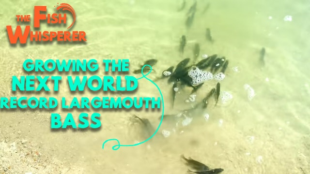 Growing The Next World Record Largemouth Bass!
