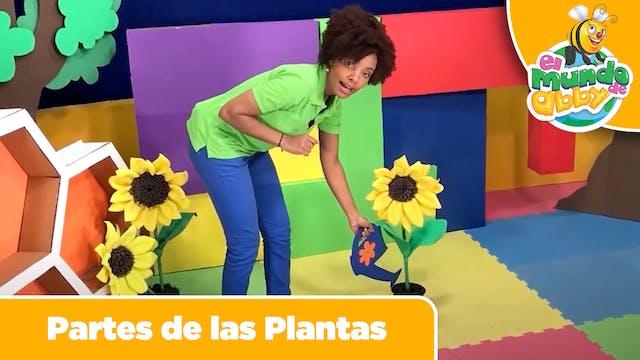 17 - Partes de las Plantas (Parts of ...