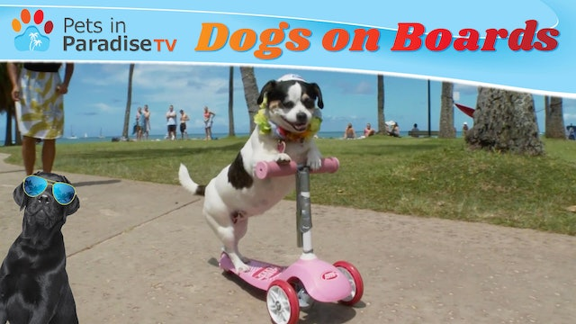 Dogs on Boards