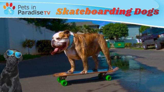 Skateboarding Dogs