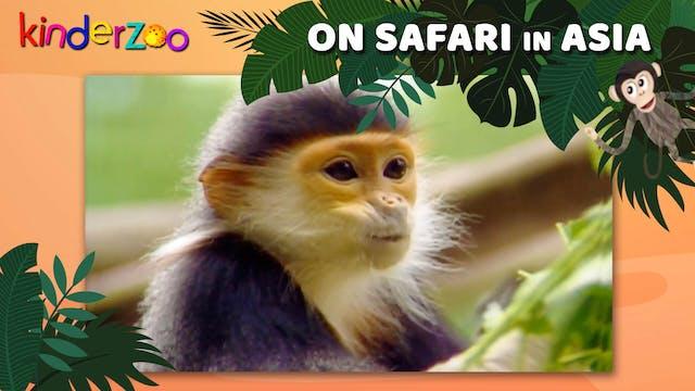 On Safari in Asia