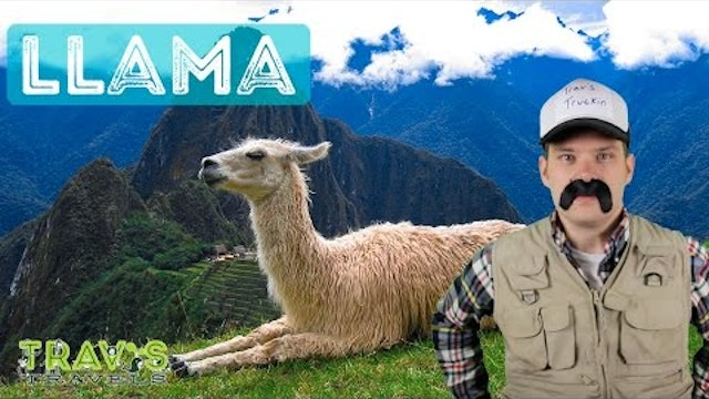 Llama - Animal Facts