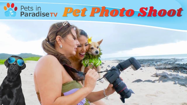 Pet Photo Shoot
