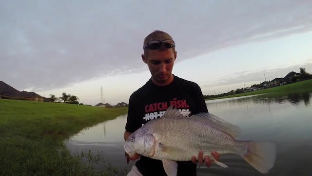 Big Freshwater Drum Caught on a Rage ...