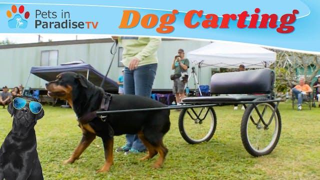 Dog Carting
