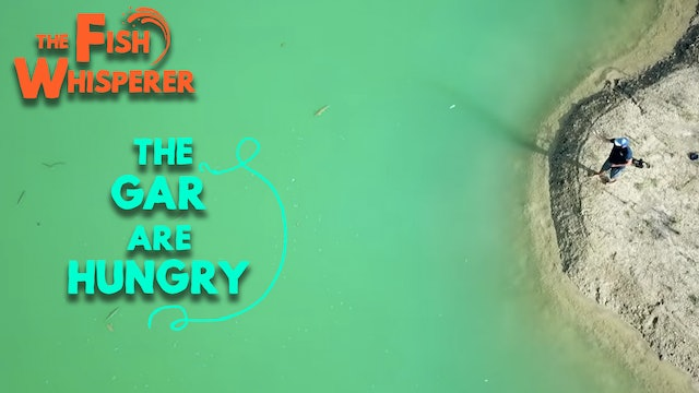 The Gar Are Hungry!