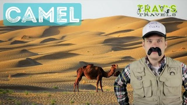Camel - Animal Facts