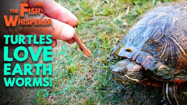 Turtles Love Earthworms!