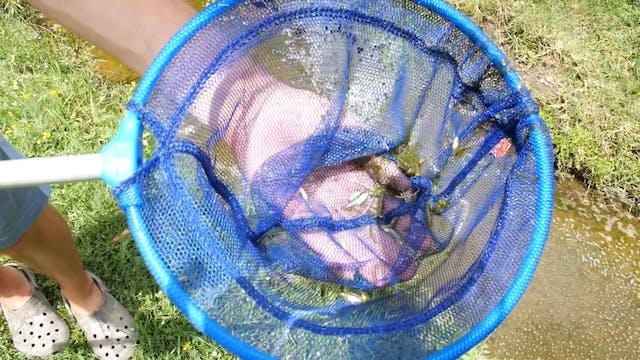 My Pet Alligator Gar Died