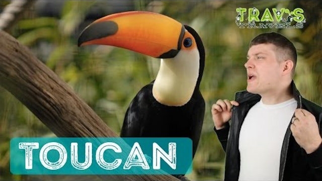 Toucan - Animal Facts