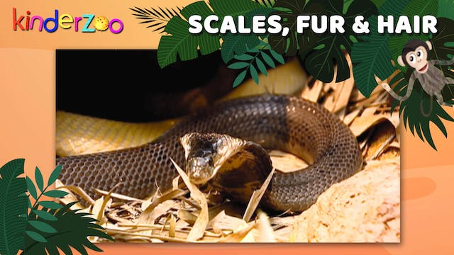 Scales, Fur & Hair