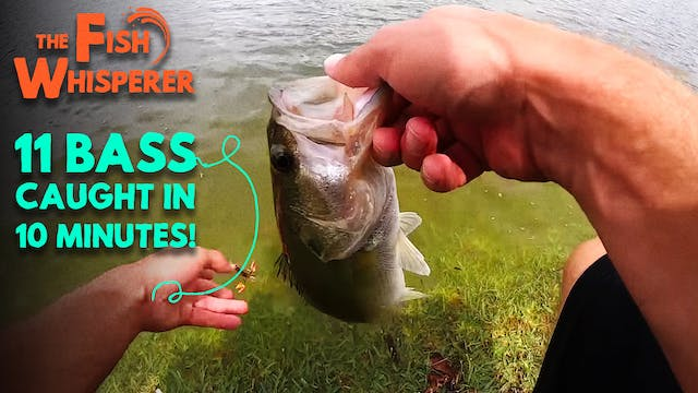 11 Bass Caught in 10 Minutes!