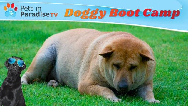Doggy Boot Camp