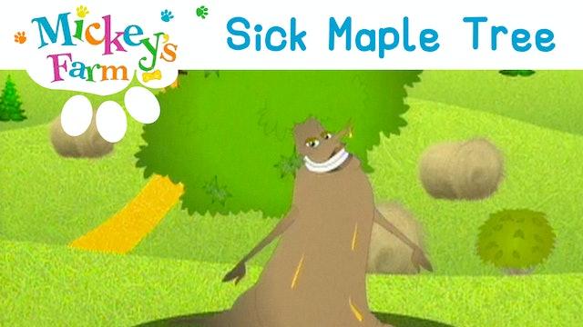 Sick Maple Tree