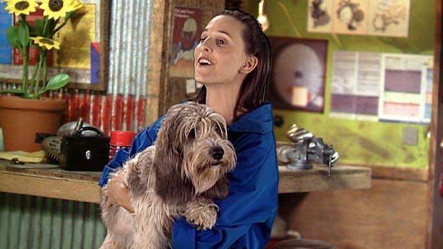 Dog Gone Doggy (Spanish)