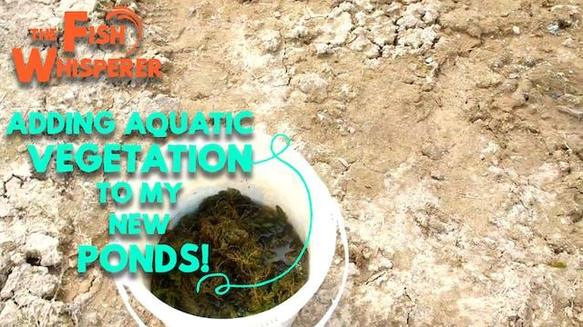 Adding Aquatic Vegetation to My New P...