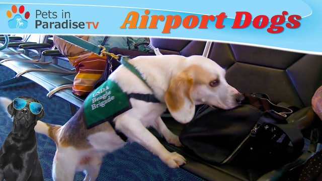 Airport Dogs