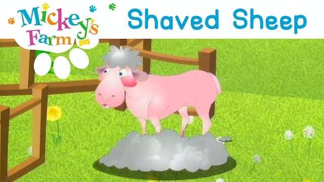 Shaved Sheep