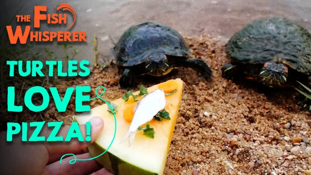 Turtles Love Pizza!