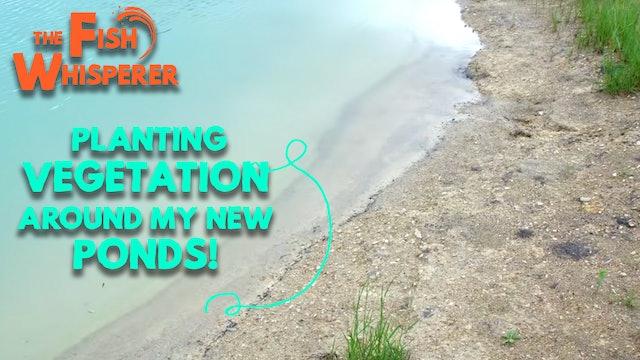 Planting Vegetation Around My New Ponds!