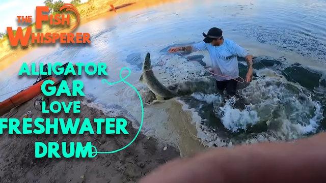 Alligator Gar Love Freshwater Drum!