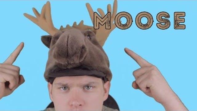 Moose - Animal Facts