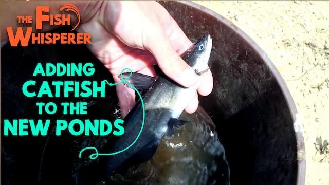 Adding Catfish to the New Ponds!