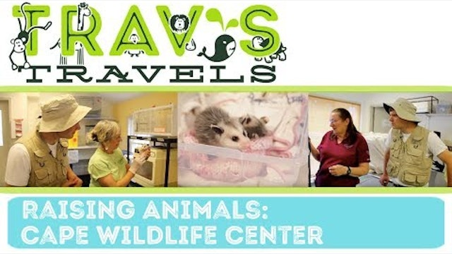 Cape Wild Life Center- Raising Animals