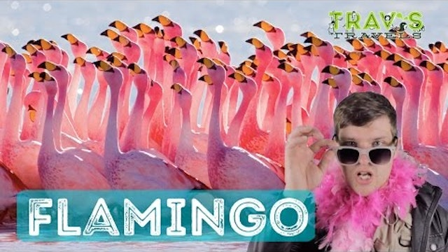 Flamingo - Animal Facts