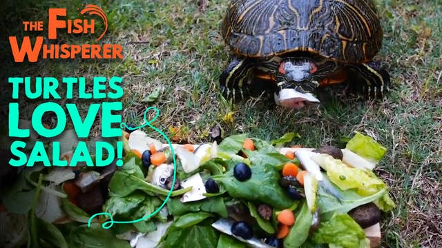 Turtles Love Salad!