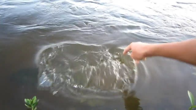 Bass Eating Fingers!