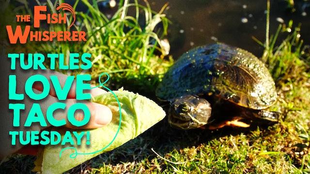 Turtles Love Taco Tuesday!