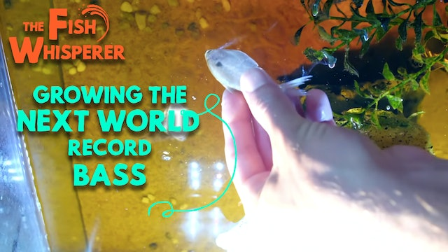 Growing The Next World Record Bass! (Part 2)