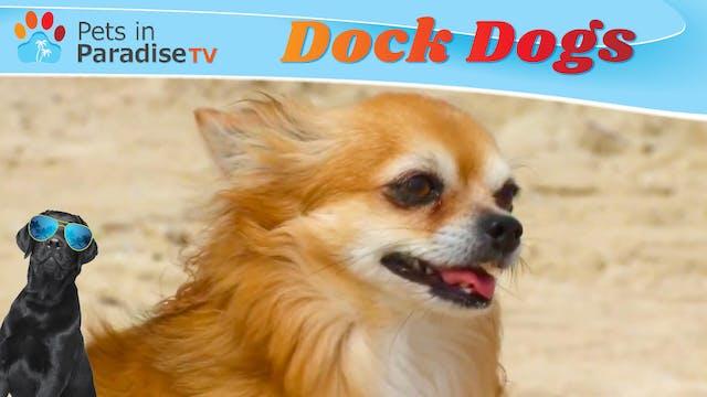 Dock Dogs