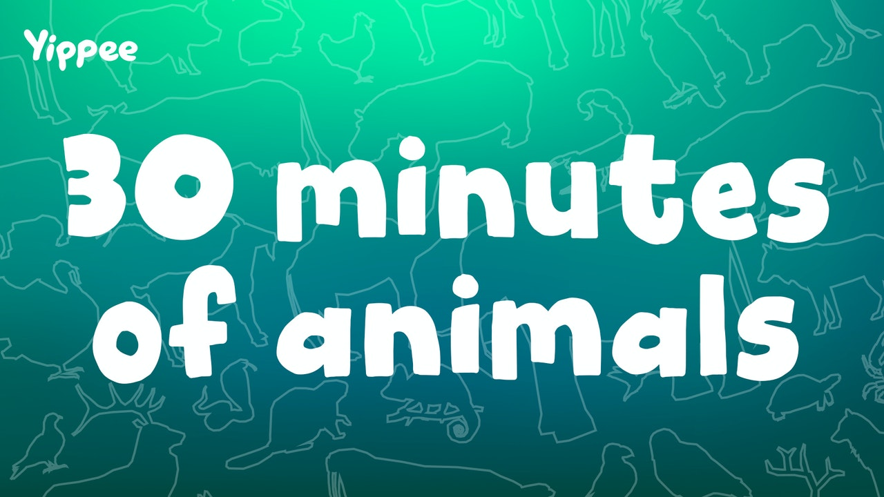 30 Minutes of Animals