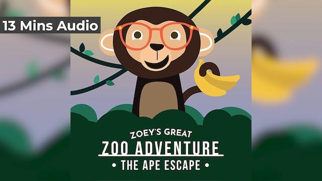 Zoo Adventure - Day 4 - Chimp