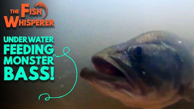Underwater Feeding Monster Bass!