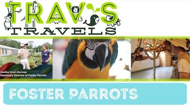 Trav's Travels- Foster Parrots