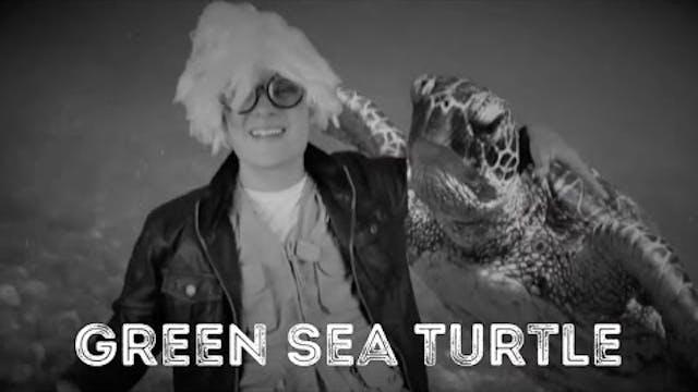 Green Sea Turtle - Animal Facts