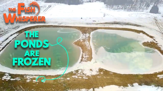The Ponds Are Frozen!