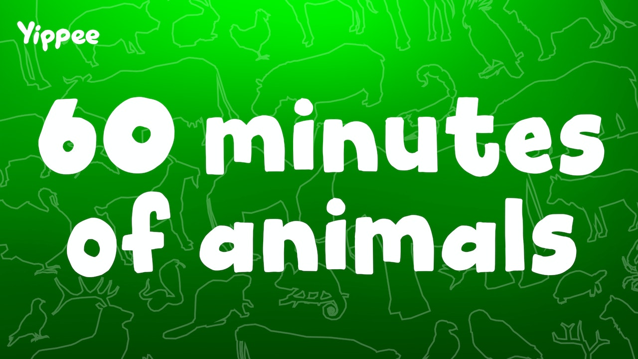 60 Minutes of Animals