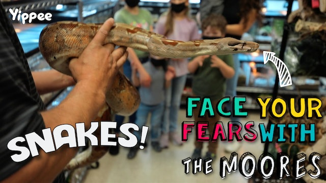 The Moores — Snakes