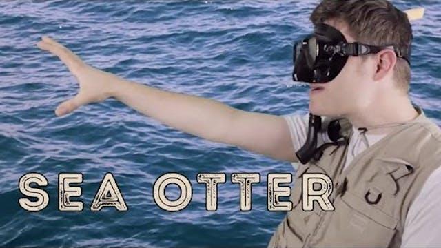 Sea Otter - Animal Facts