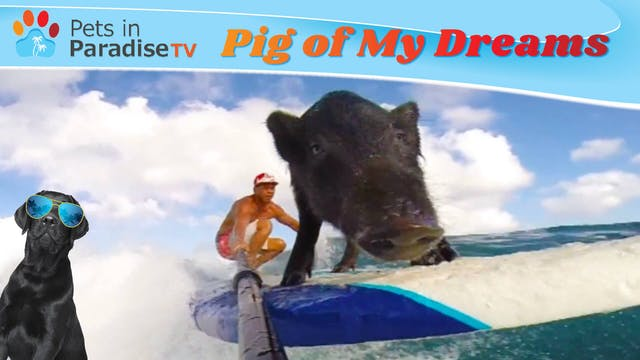 Pig of My Dreams