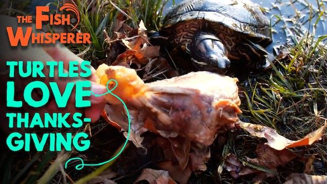 Turtles Love Thanksgiving!