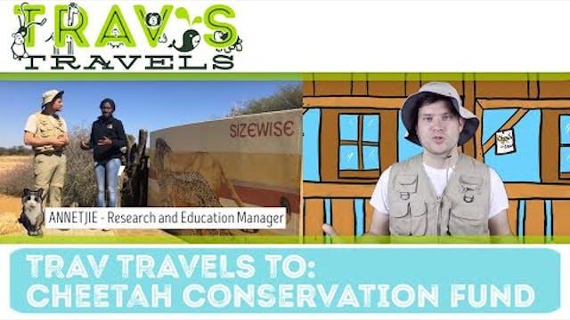 Trav's Travels - Cheetah Conservation...