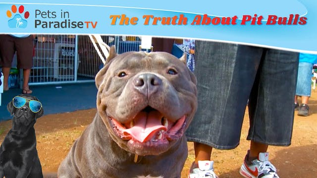 The Truth About Pit Bulls