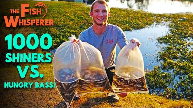 1000 Shiners vs. Hungry Bass!